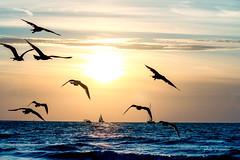 Summer memories . (rudi.verschoren) Tags: netherlands holland seeside seagulls blue water sun sunset ships sailers horizon contrast colors warm summer sky europe eos canon 70d creative