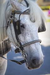 Kirby (<Phantasmagoria>) Tags: 7dwf fauna horse niagara ontario everyimagetellsastory steed copyrightvanessabartosek macro 90mm