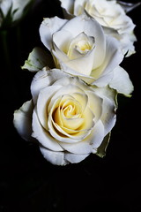 DSC_1434 (PeaTJay) Tags: nikond750 sigma reading lowerearley berkshire macro micro closeups gardens indoors nature flora fauna plants flowers bouquet rose roses rosebuds