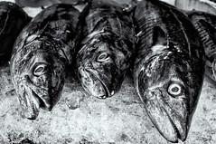Phu Quoc, Vietnam (Kevin R Thornton) Tags: d90 phuquoc market nikon travel fish stilllife food vietnam daymarket duongdong thànhphốphúquốc tỉnhkiêngiang vn