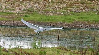 2018.09.08 Blashford Lakes (16)