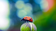 BUG - 5845 (ΨᗩSᗰIᘉᗴ HᗴᘉS +24 000 000 thx) Tags: bug insect macro bokeh hensyasmine namur belgium europa aaa namuroise look photo friends be wow yasminehens interest intersting eu fr greatphotographers lanamuroise