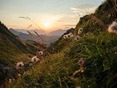 La Gruyère - Jaun / Ref.02363 (FRIBOURG REGION) Tags: suisse switzerland schweiz fribourgregion fribourgrégion lagruyère jaun été sommer summer préalpes voralpen prealps alpes alpen alps montagne mountains berge colduloup leverdesoleil sonnenaufgang sunrise sky himmel ciel gstaad bern ch paysage landschaft landscape leverdusoleil