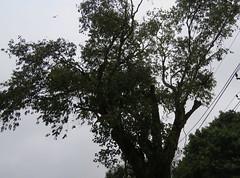 IMG_6124 (mohandep) Tags: hessarghatta lakes karnataka butterflies birding nature wildlife insects signs food