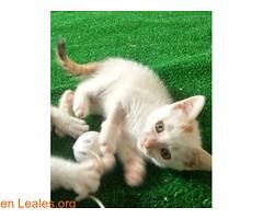 ADOPCION RESPONSABLE (Leales.org • tu guía animable) Tags: adopta adoptar adoptanocompres noalmaltratoanimal adopción sebusca extraviado perdido perro gatos lealesorg