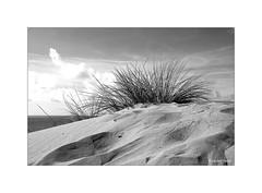 Dans la dune... (Laurent TIERNY) Tags: océan sable