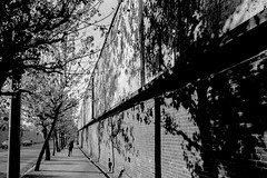 A city 718 (soyokazeojisan) Tags: japan osaka bw city street blackandwhite tree monochrome analog olympus m1 om1 28mm film trix kodak memories 1970s 1975