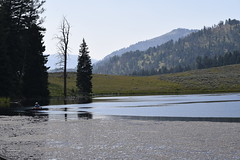 _DSC0600 (alnbbates) Tags: august2018 yellowstonetrip yellowstonepark hiking troutlake lake