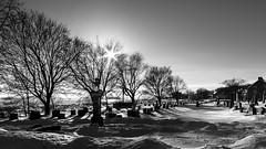 ile 2018-118a (Agirard) Tags: orleans island québec canada landscape suns et vintage lens contât zeiss distagon 25mm 2825mm très sun star river stlaurent stlawrence stjean stjohn cemetery cimetière