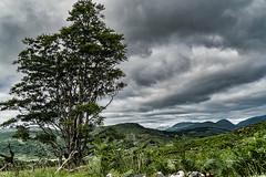 Cloud Collection (*Capture the Moment*) Tags: 2018 clouds farbdominanz hikingtourhimmel holiday ireland irland june killarneynationalpark landscape landschaft lordbrandon´scottage muckrosshouse sky sonya6300 sonye18200mmoss sonyilce6300 trip wetter wolken cloudy green grün wolkig
