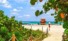 The joy of returning to paradise. (Aglez the city guy ☺) Tags: miamibeach sobe beachscape beach green grass trees walking walkingaround waterways sand beachshore urbanexploration woman miamifl outdoors