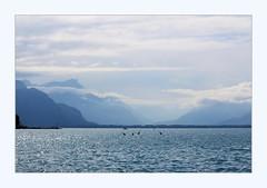 canoing (overthemoon) Tags: switzerland suisse schweiz svizzera romandie vaud vevey lake léman lakegeneva boats mountains water clouds blue silhouettes sparkles