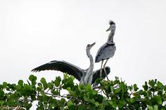 D850-2752 (yowstanley) Tags: nikon nature bird 200500mm d850 tree garden