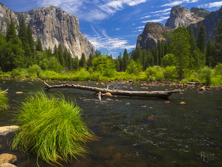 The Summer Colors of Yosemite
