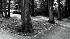 In the alley (frankdorgathen) Tags: bottrop ruhrgebiet ruhrpott quadrat josefalbersmuseum building blackandwhite monochrome schwarzweis schwarzweiss tree baum