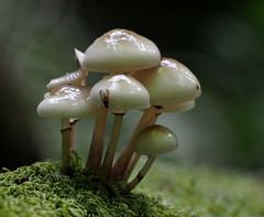 fungi (Tim Gardner pics) Tags: