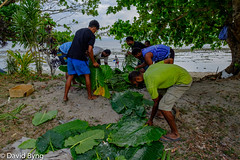 Men Preparing the Lovo in Vusaratu (Dave Byng) Tags: 2018 fiji forestcamp operationwallacea southpacific vusaratu winter lovo earthoven celebration feast villagers outdoorcooking