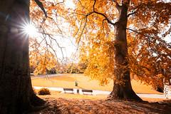 Im Park (Gruenewiese86) Tags: canon harz herbst wald autumn wood woodland leaf blatt blätter 6d wernigerode harzlandschaft harzvorland lustgarten