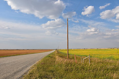 Country Road (Jane Olsen) Tags: outdoor landscape sky clouds grass field pole fence wood road alberta rural