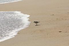 IMG_3623 (amanda_fernandes) Tags: outerbanks killdevilhills beach
