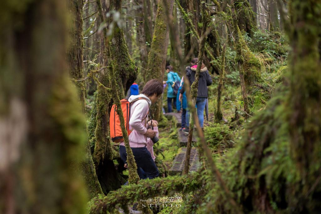 太平山翠峰湖環山步道 |走在泥濘的道路上,只為途中美景 | 宜蘭大同鄉30