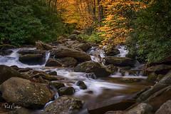 Another 30 Days -- Can't Wait (Reid Northrup) Tags: autumn northcarolina nikon reidnorthrup stream forest leaves longexposure cascades fall blueridgemountains blueridgeparkway