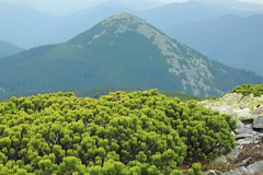 View of Homyak from Synyak Mountain (Pavlo Kuzyk) Tags: carpathians karpaty mountains pine rocks landscape view nature canon