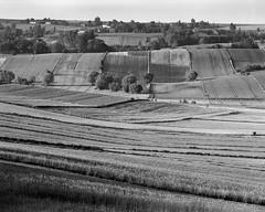 Among the texture of the fields (fotoswietokrzyskie) Tags: landscape grass monochrome field mamiya rz67 apo 350mm medium format 6x7 lines fields analog trees sky ilford delta 100 summer july
