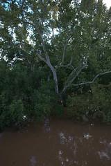 IMG_5255.CR2 (jalexartis) Tags: fayetteville fayettevillenc fayettevillenorthcarolina aftermath capefearriver hurricaneflorence crest rivercrest