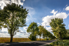 Trees by the road (Michał Banach) Tags: canonef1635mmf4lisusm canoneos5dmarkiv greaterpoland poland polska bluesky clouds countryside field landscape nature outdoor poutside road rural summer tree trees opalenica greaterpolandvoivodeship pl