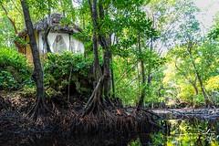Experience serenity amongst the mangroves at Chale Island. #mangroves #holiday #indianocean #whyilovekenya (The Sands Kenya) Tags: beach island kenya africa indian ocean diani