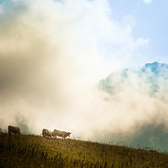 Cows in Alps (Zeeyolq Photography) Tags: france savoie albiezmontrond beaufort cows nature clouds mountains sky milk alps alpes alpage cow