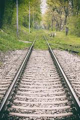 Green Mile (CoolMcFlash) Tags: rail tracks geleise schienen train forest green leadingline straight gerade canon eos 60d tree nature vanishingpoint zug wald grün fluchtpunkt baum natur fotografie photography lobau tamron b008 18270