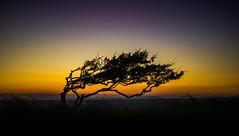 Sun tree (Pan.Ioan) Tags: tree silhouette horizon nature sky sunset beauty beautiful outdoors amazing field