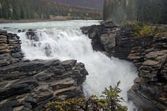 Athabasca Falls (bkamerman) Tags: athabasca falls