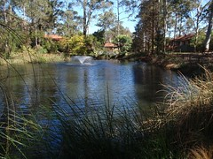 The Lakes of Cherrybrook loop (400m) (trailhikingaust) Tags: hikes newsouthwales trails walks