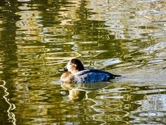 aves Parque Nacional de las Tablas de Daimiel Ciudad Real 05 (Rafael Gomez - http://micamara.es) Tags: aves parque nacional de las tablas daimiel ciudad real