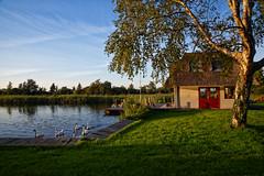 House by the water (Julysha) Tags: house swans autumn dxo september 2018 evening thenetherlands tree grass d850 sigma241054art water nikon nederhorstdenberg