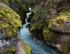 Next Year ((JAndersen)) Tags: avalanchelake avalanchecreek water waterfall glacier glaciernationalpark montana usa nikon d810 hiking