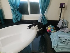 20180614_070143 (sobca) Tags: cat kottur kitte eesa miu kat pussi kato chat katze popoki gatto chatool billi felis cattus gato katt meo кошка बिल्ली 猫 γάτα vighro ᏪᏌחתול