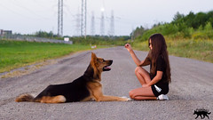 Sisers & Doggos (MedicalRx) Tags: dog dogs d5100 dogphotography dogtrainer derp sdit photography puppy play puppies portrait shepsky shepherd summer sunset canada canine chien candid alaskan alaskanhusky nature action family fun funny friends love shooting germanshepherd germanshepherddog gerberianshepsky husky huskymix child 50mm best quebec nikon animal canadian caninos mutt medrx mixed breed mix