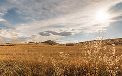 _DSC6236 (rubengalvezfoto) Tags: landscape castle spain wheat nature sunset light spanish blue sky yanguas de eresma domingo garcia segovia
