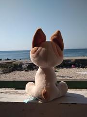 "Котенок по имени ""Гав"" Kitten named ""Woof"" (Sankab) Tags: cats toy kitten sea view cafe"