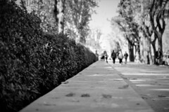 DSC05043 (Lea Ruiz Donoso) Tags: madrid spain arganzuela manzanares paseo yeserías madridrio bw blackandwhite