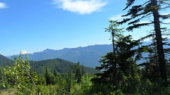 Ontop Of Copper Creek, Wa (blogginandmommin) Tags: outdoors nature trees green bright sun clouds blue brown black pretty beautiful amazing wow natural nofilters