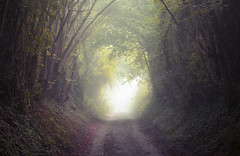 Bepton Tunnel (Explored) (Simon Verrall) Tags: autumn bepton thesouthdowns sussex september 2018 trees tunnel mist track path bridleway