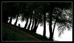 Bord de Loire / Loire's riverside - Tours (christian_lemale) Tags: loire fleuve river bord arbre tree eau water tours touraine france nikon d7100