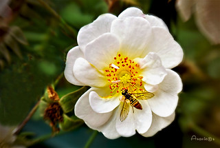 Flor con avispa