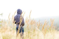 in a hay field in Tahko (VisitLakeland) Tags: finland kuopiotahko lakeland tahko field forest hay heinä hey hiking luonto luontokohde maisema metsä nature outdoor retkeily ruohikko scenery walking