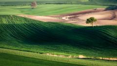 Sempre colline (SDB79) Tags: colline ururi verde molise campagna agricoltura